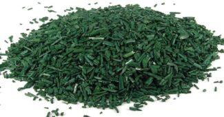 algue bleue vert spiruline